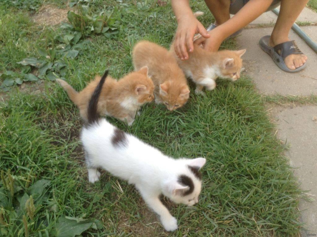 Когда котенка можно забирать от кошки, в каком возрасте?