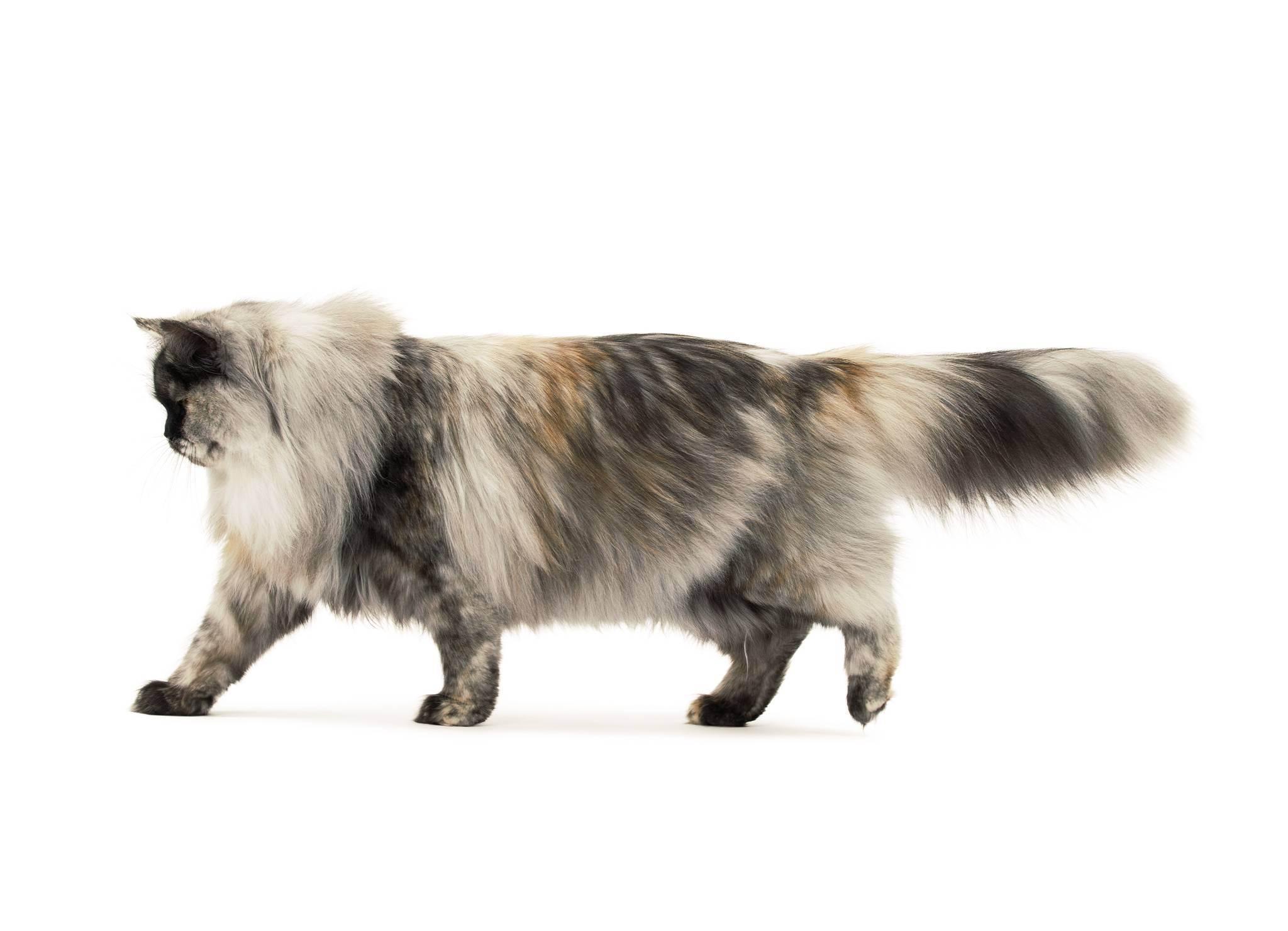Кого выбрать, кота или кошку – советы и рекомендации