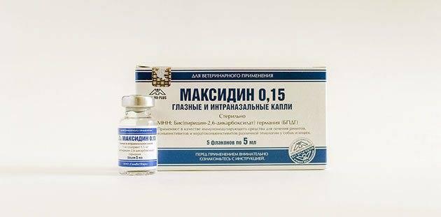 Максидин для кошек: инструкция по применению препарата