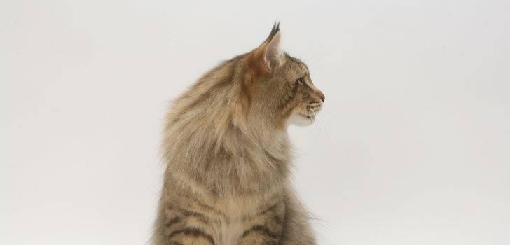 Стресс у кота: виды, симптомы, лечение