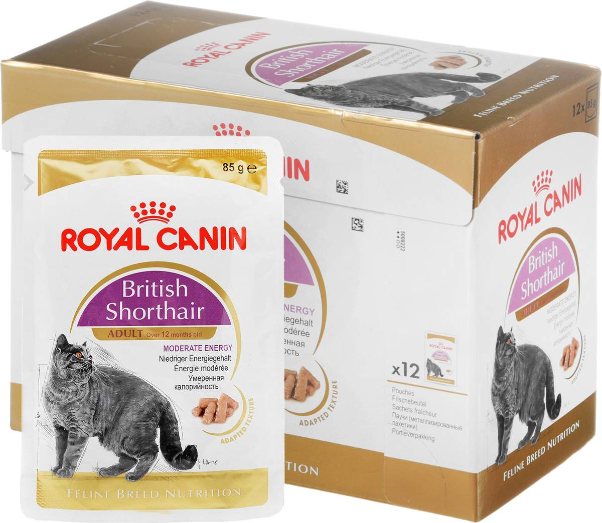 Корм для британских котят: можно ли кормить их сухим кормом? обзор лучших кормов премиум-класса и другие варианты