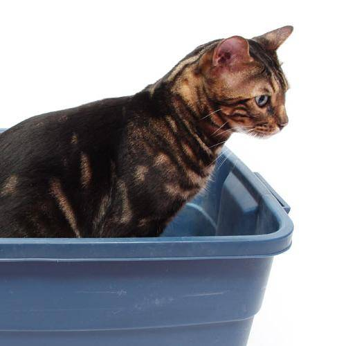 Что делать, если у кошки запор: симптомы и лечение в домашних условиях