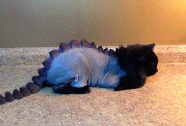 Груминг британских кошек
