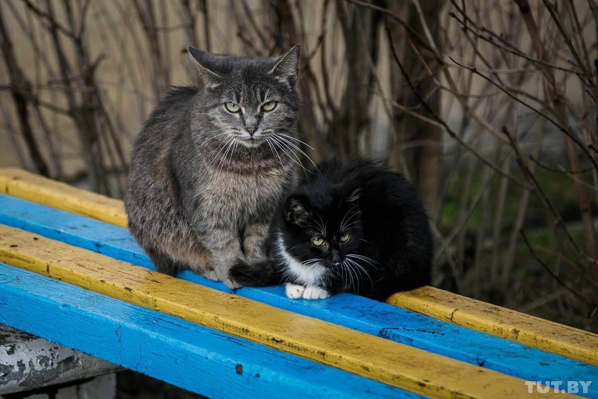 Кошка укусила, и от укуса опухла рука или нога: что делать, чем лечить в домашних условиях?
