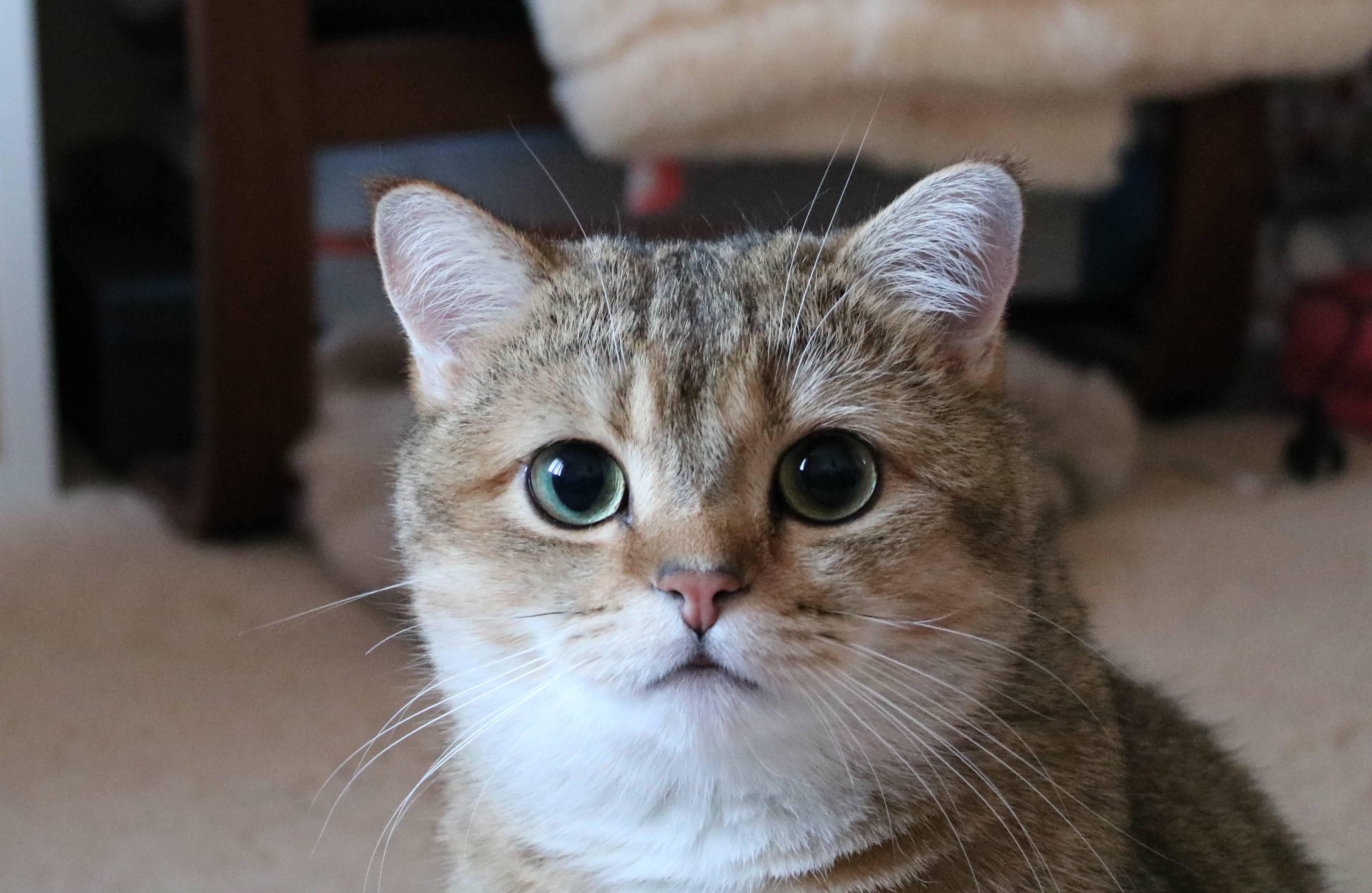 Фурминатор для кошек: что это такое, как пользоваться, какой выбрать?