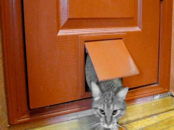Дверца для кошек в дверь: отверстие-лаз для домашних животных, монтаж своими руками