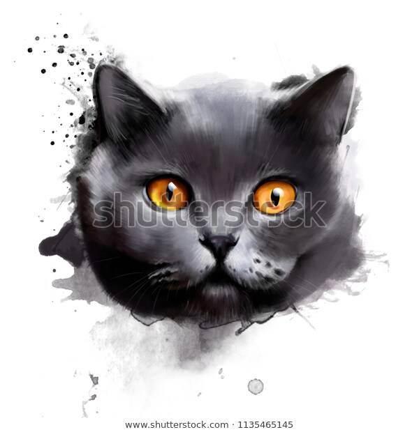 Чёрный окрас у британских кошек и котов