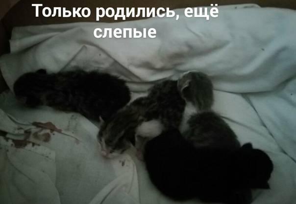 Когда котята открывают глаза и начинают видеть?