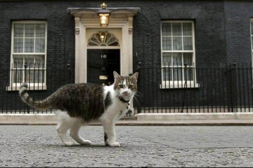 Декоративные кошки ловят мышей? - запись пользователя fintilop (fintilop) в сообществе домашние животные в категории хотим завести зверушку - babyblog.ru