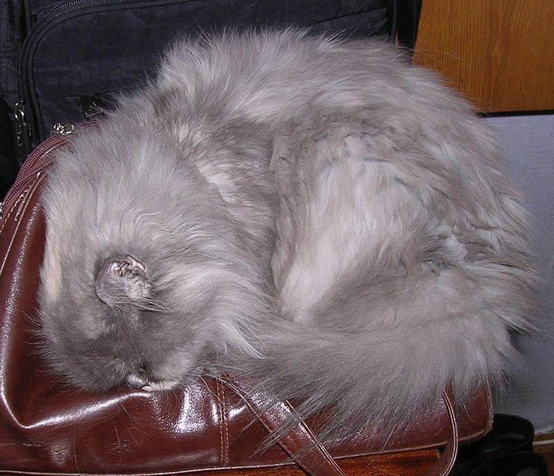 Сонник умная кошка. к чему снится умная кошка видеть во сне - сонник дома солнца