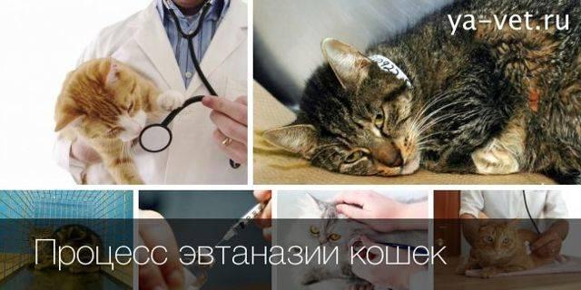 Как усыпить кота лидокаином | что говорят насекомые