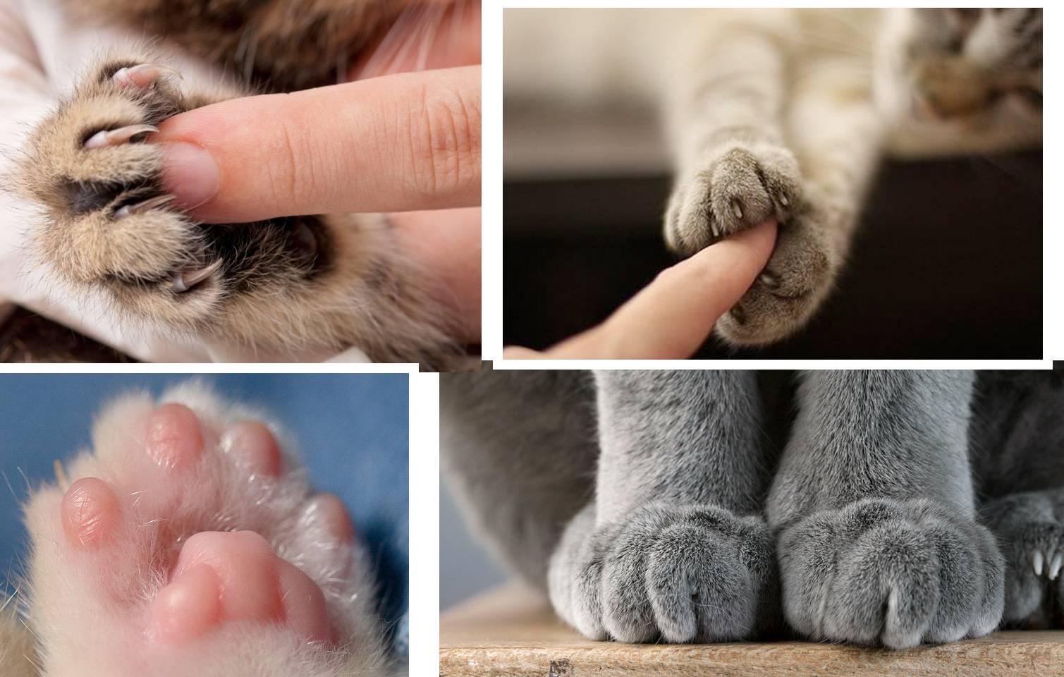 Почему кошка топчет вас передними лапками: причины версии топтания и полезные советы ветеринаров