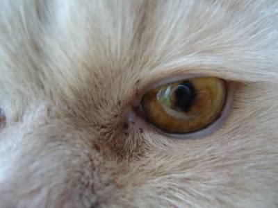 Почему у кошки коричневые выделения из глаз