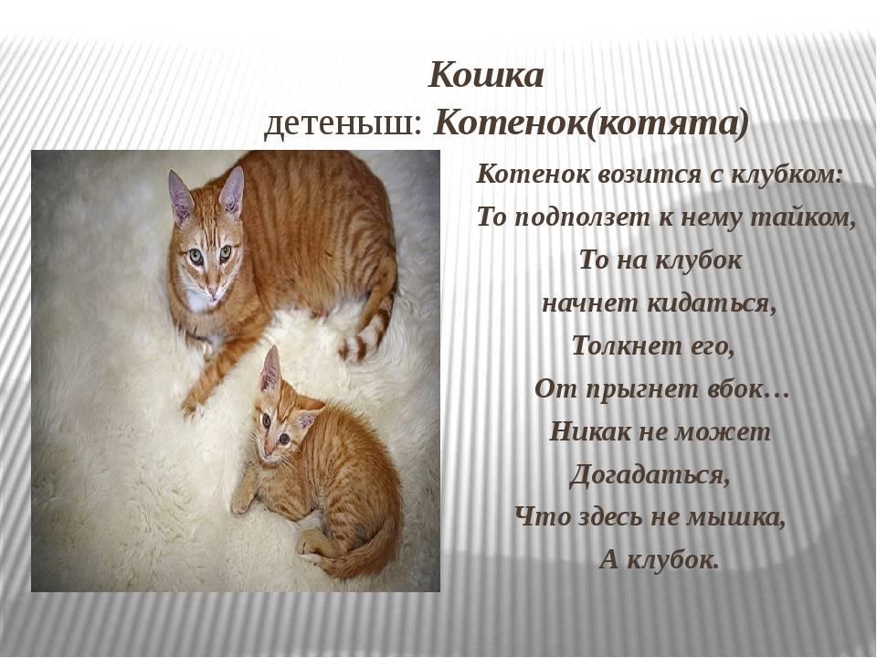 Сонник кошки разных пород. к чему снится кошки разных пород видеть во сне - сонник дома солнца