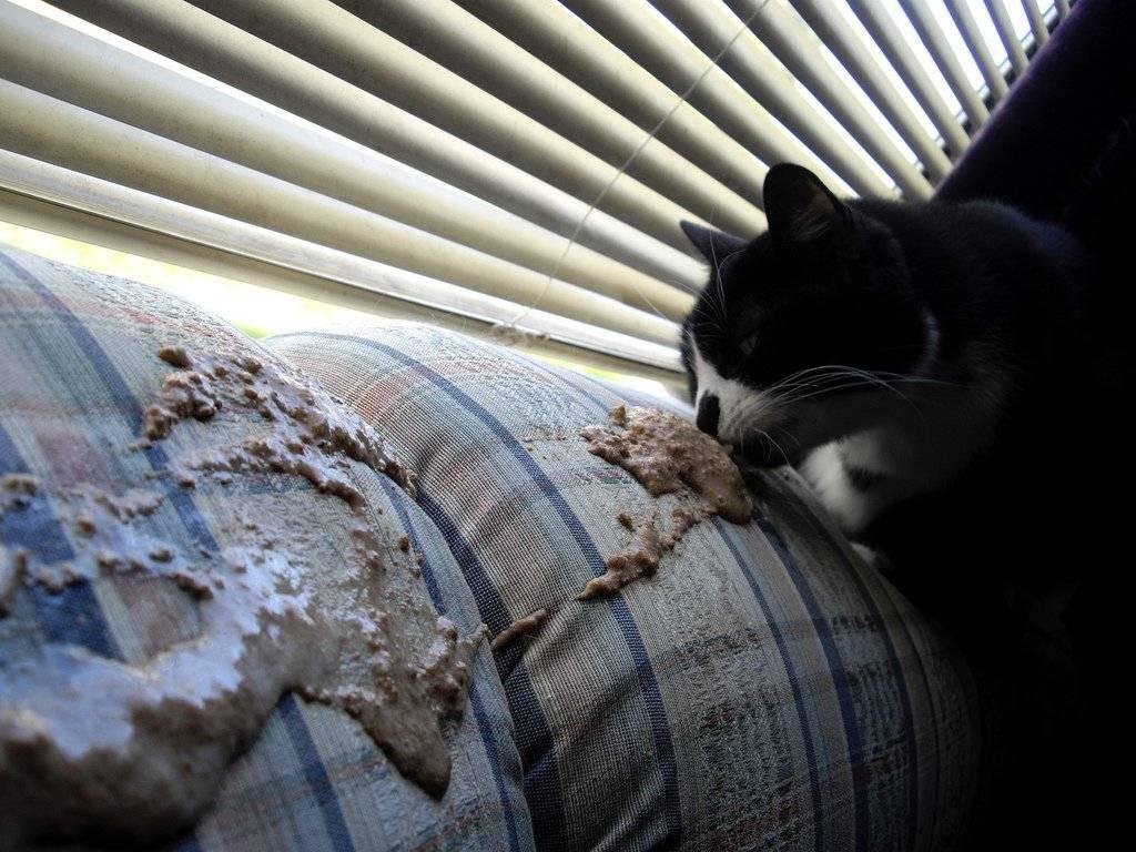 Почему кот рыгает после каждого приёма пищи: что делать, если рыгает пеной? почему кошки срыгивают еду кот часто срыгивает причины