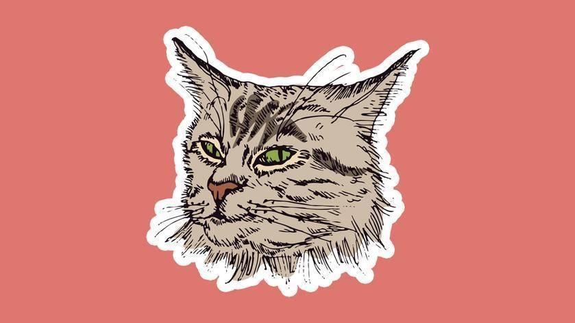 Агрессивная кошка: что делать и куда бежать. агрессия у кошек и котов агрессия кота на хозяина что делать