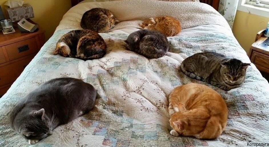Котёнок постоянно спит: почему, что делать, надо ли его будить, надо ли вести к ветеринару. сонливость у котят: норма или нарушение? - автор екатерина данилова - журнал женское мнение