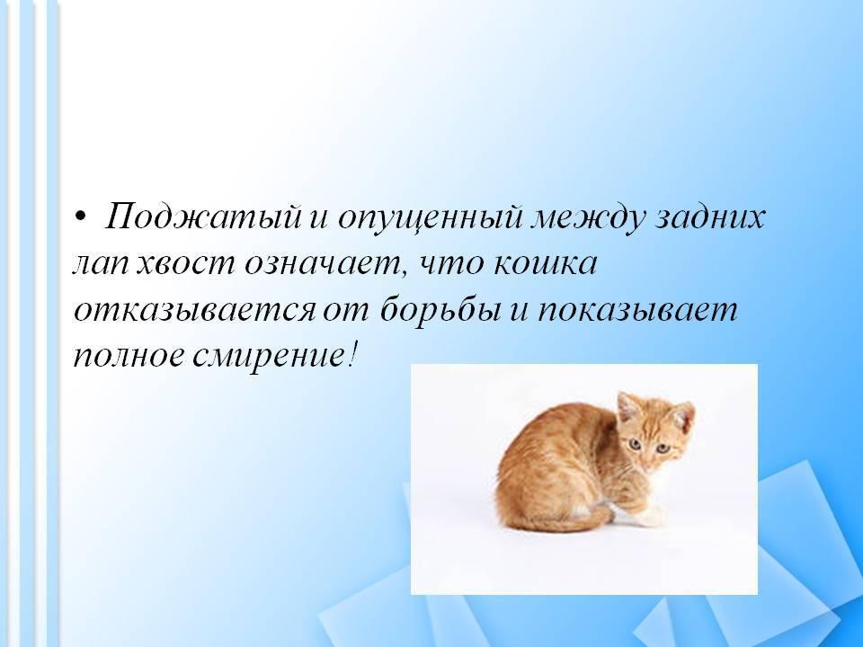 8 интересных фактов о кошачьих хвостах