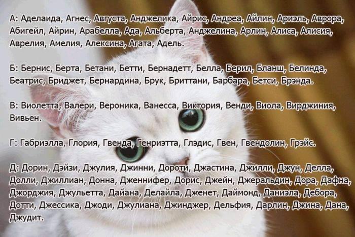 Простые клички для котов и кошек, список имен для мальчиков и девочек.