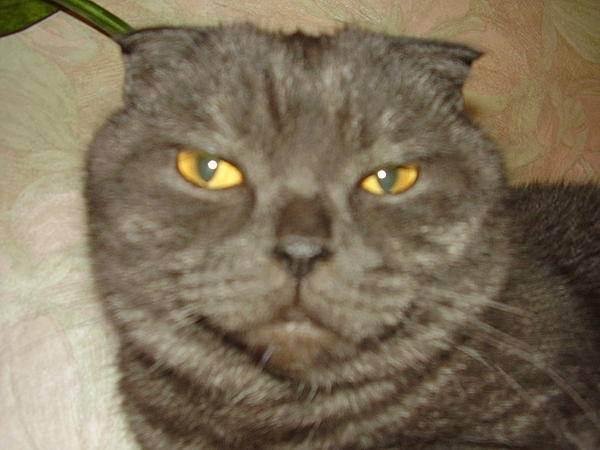 Можно ли сушить кошку феном? суши кота! как сушить кота после купания.