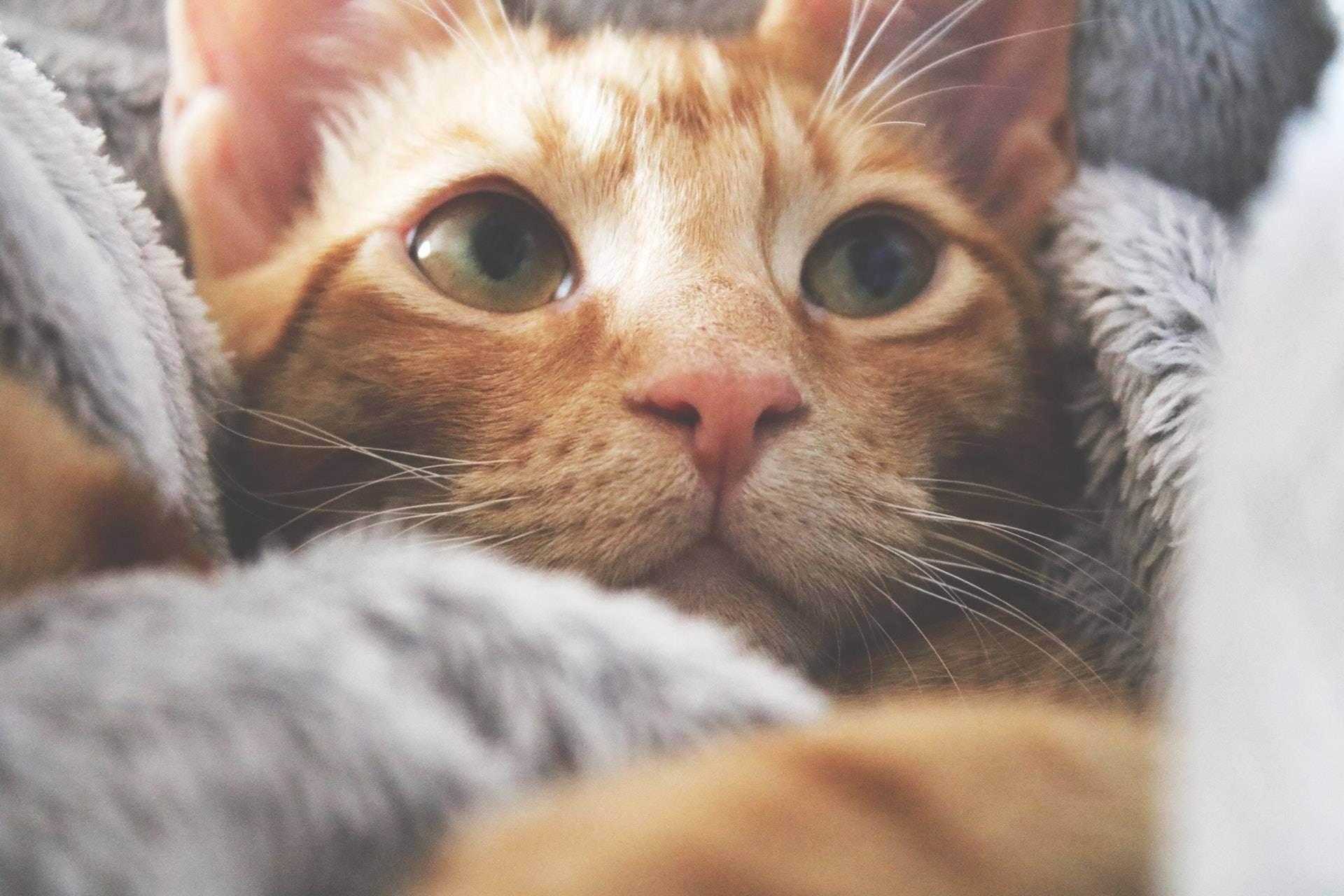 Что делать, если кошка отравилась