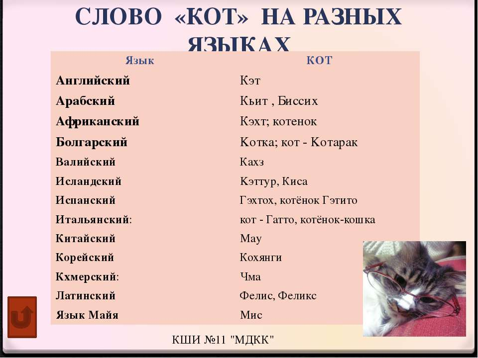 Имена для котов 2020 мальчиков, красивые клички черных, рыжих, серых, белых кошек, редкие котятам