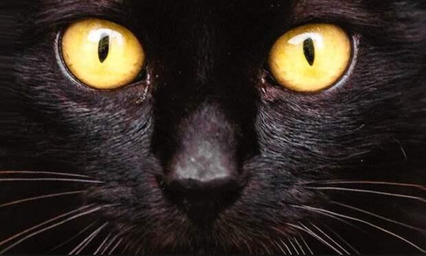 Наука и мистика: почему кошке нельзя смотреть в глаза