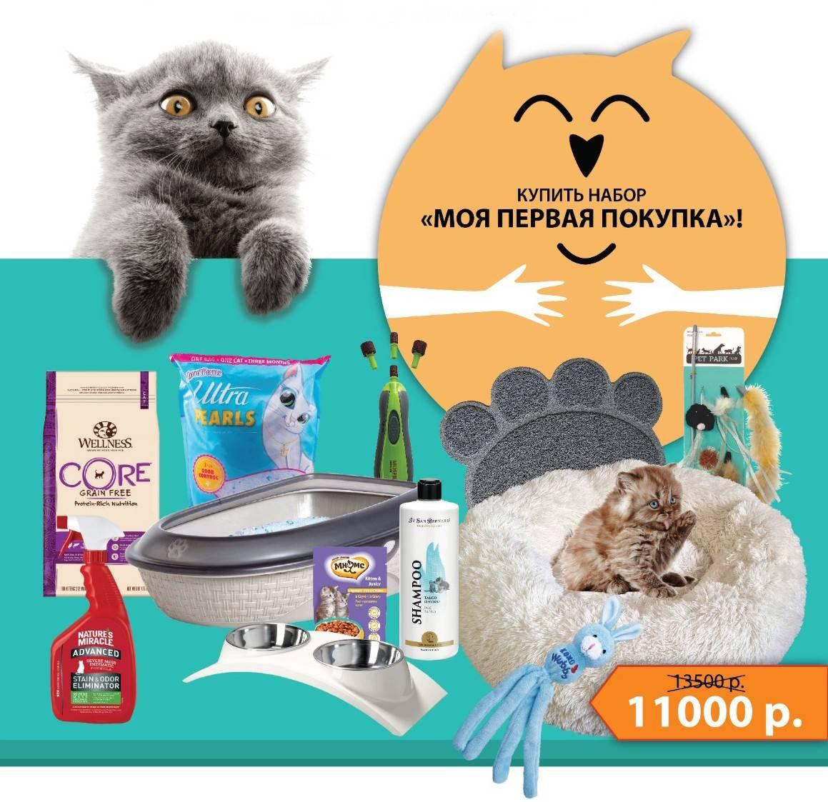 Когда в доме появляется кошка: что нужно купить для котенка?