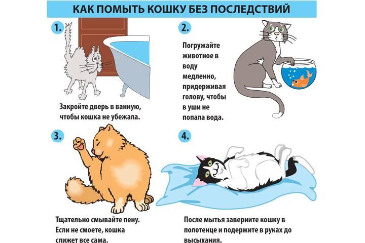 Как помыть кота в домашних условиях