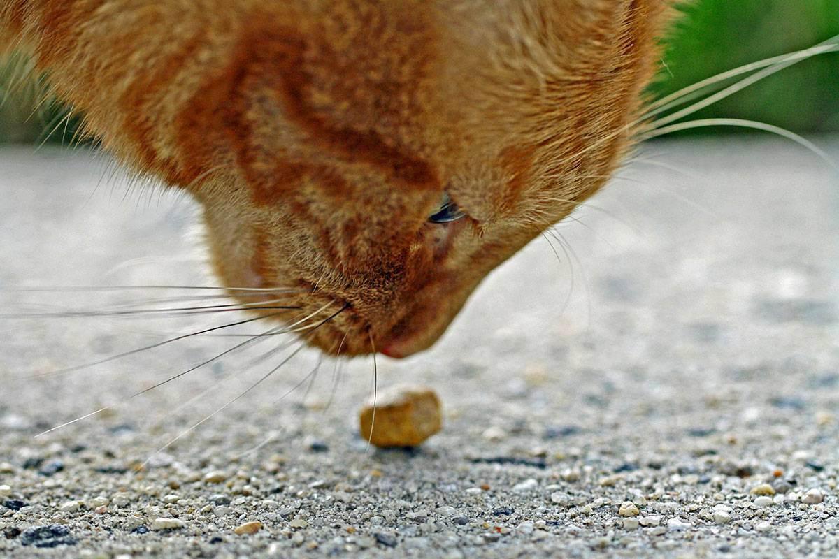 Питание кошек. вся правда о сухом корме » женский мир