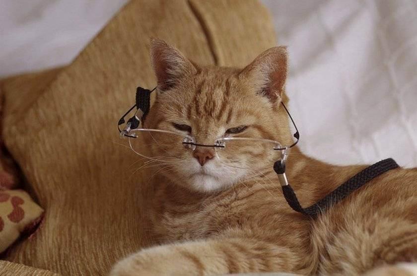 Когда кастрировать кота: в каком возрасте кастрируют котов и почему стоит это делать?