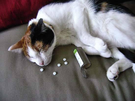 Что делать, если кот отравился: инструкция