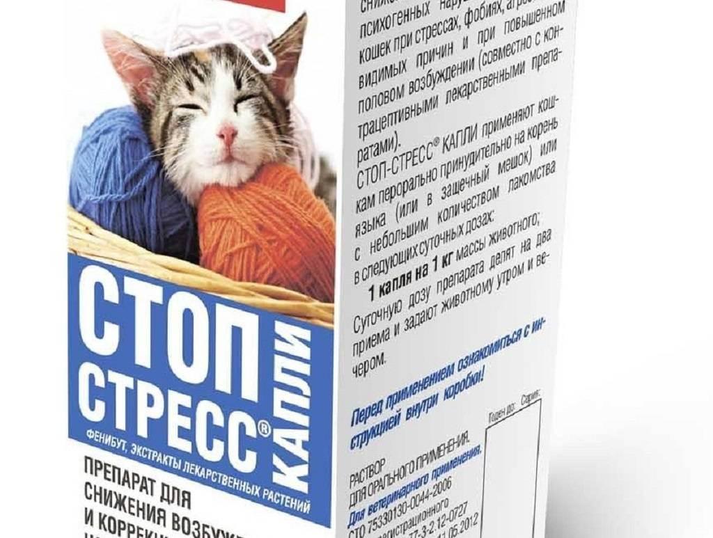 Стресс у кошки – 3 основных группы успокоительных препаратов