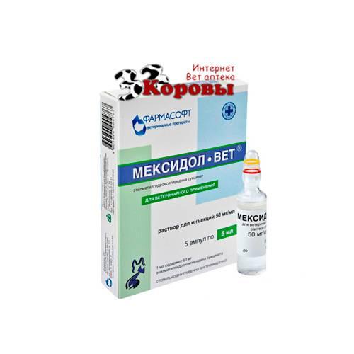 Ветеринарный препарат «мексидол»: как применять для собак и кошек