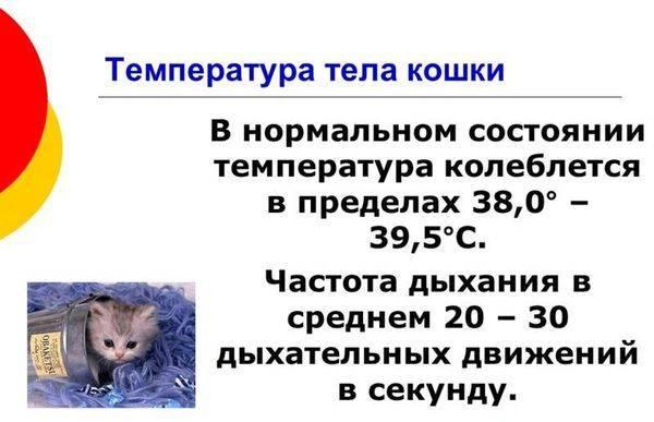 Как понять, что у кошки температура: проверяем с помощью градусника и внешним признакам