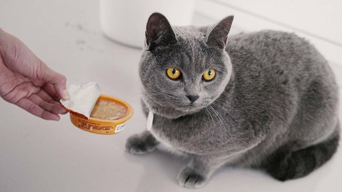 Как накормить кота, если он отказывается от еды