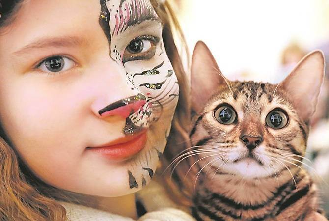 Читать онлайн все кошки возвращаются домой