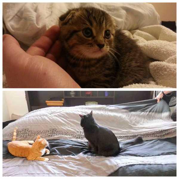 Почему кошка начала писать на одеяло на кровати и что делать владельцу