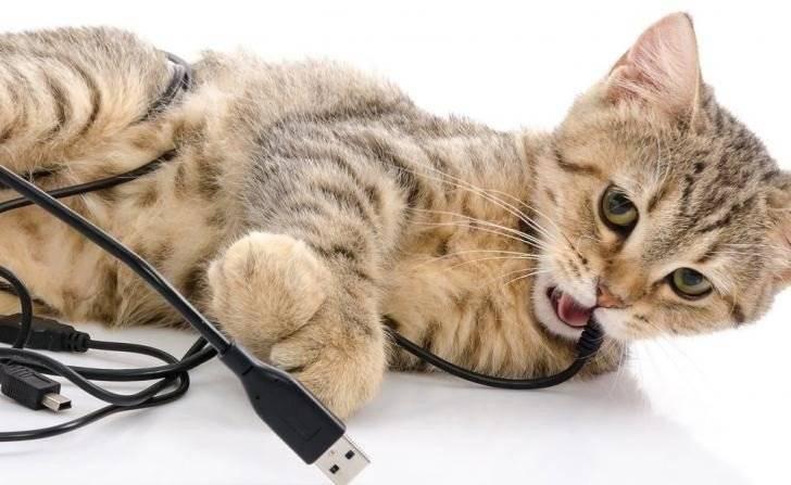 Как отучить кошку от вредных привычек - всё о кошках и котах