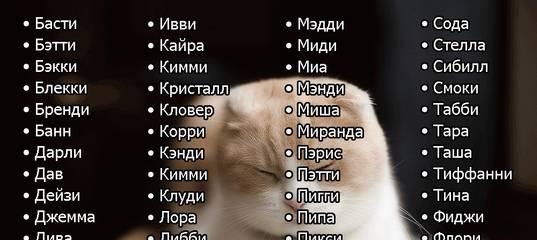 Как назвать кошку - клички для котят мальчиков и девочек