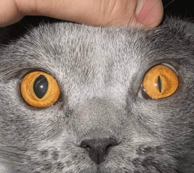 У кошки один зрачок больше другого после удара мордой | my darling cats