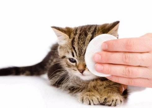 Всё, что нужно знать о липидозе печени у кошек