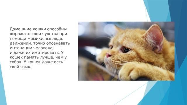 Есть ли у кошек память и какая она - oozoo.ru