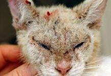 Читать книгу корма для кошек ирины шишигиной : онлайн чтение - страница 1