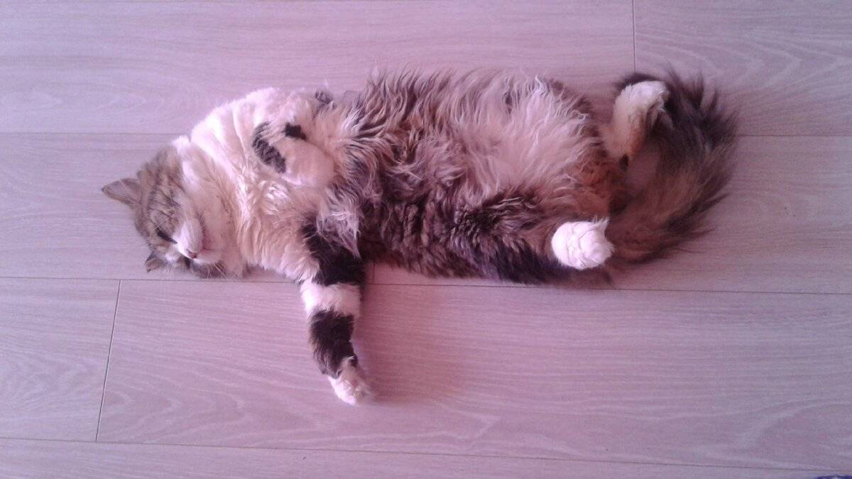 Кот храпит - определение причин и методы лечения