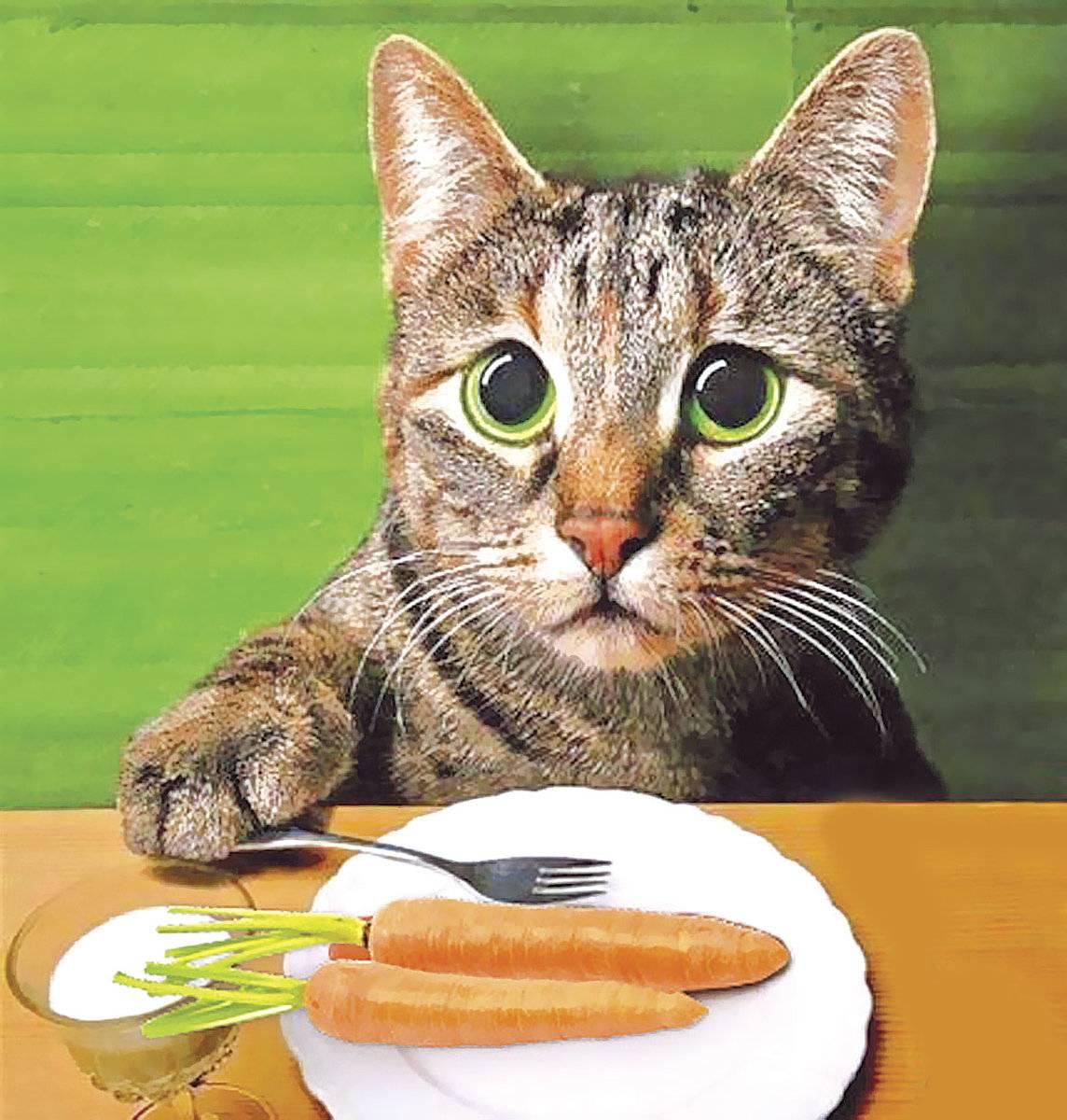 Что любят кошки из еды больше всего, чем можно побаловать любимого кота?