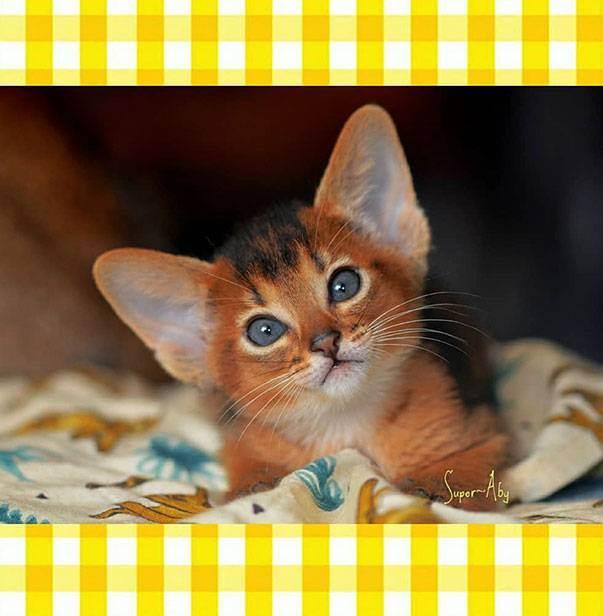 ♪ звуки природы пение птиц - релакс для кота