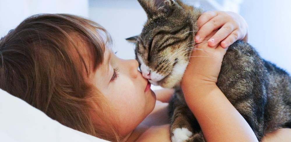 Почему нельзя целовать кошек и котов