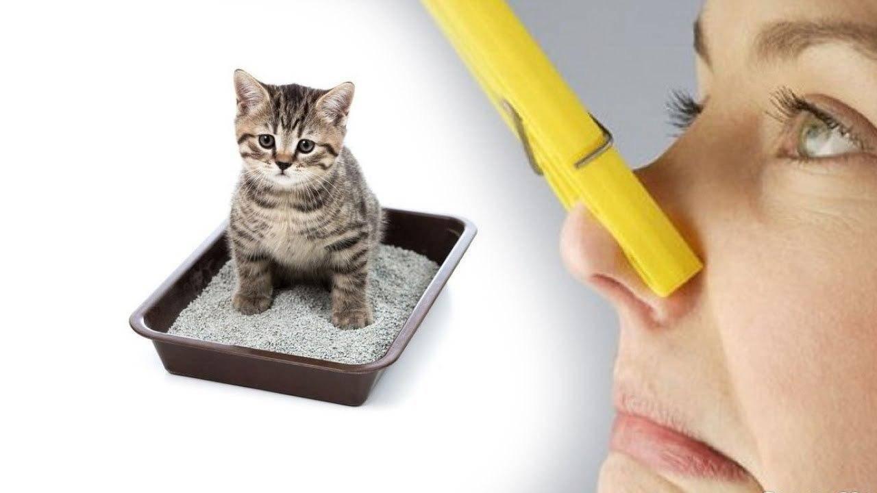 Как избавиться от запаха кошачьей мочи в доме