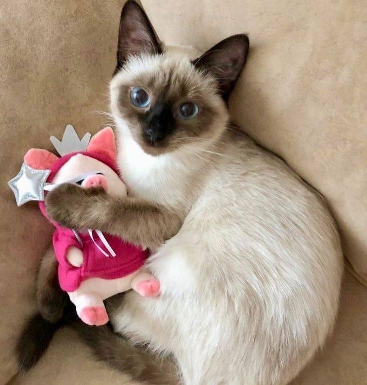 Имена и клички для кошек девочек-более 1000 вариантов названий